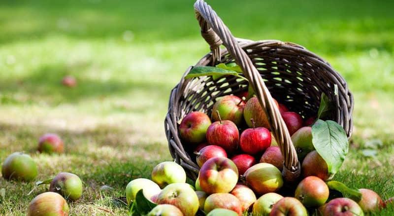 Velmi zdravé jablka