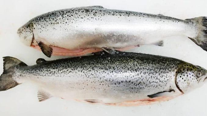 Losos jako velmi zdravá ryba