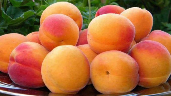 Meruňka oblíbené ovoce s vysokým obsahem vitamínu C