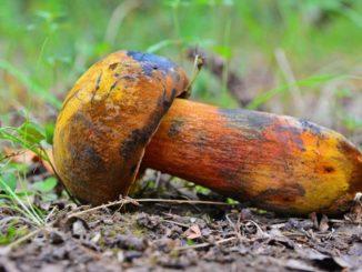 Nepravdivé mýty o houbách