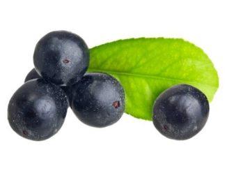 Bobule açaí: tropické ovoce s výjimečně vysokým obsahem antioxidantů