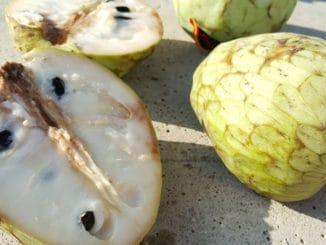 Čerimoja je údajně nejchutnější a nejzdravější ovoce světa