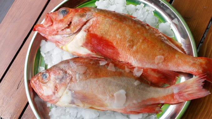 Okouník mořský má nízkotučné maso. Podle některých jde dokonce o nejzdravější rybu vůbec
