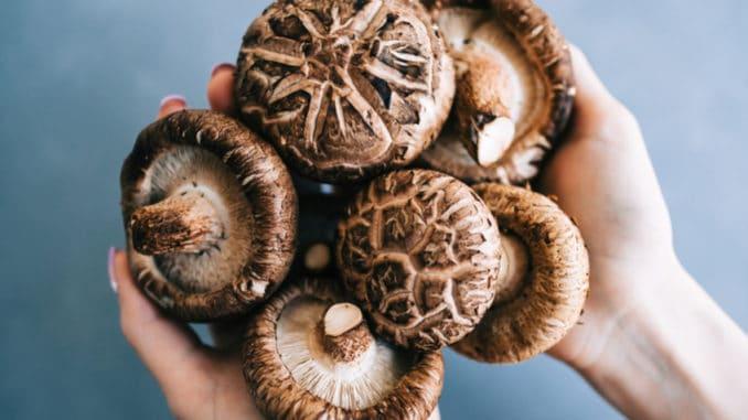 Shiitake: Asijská královna mezi houbami