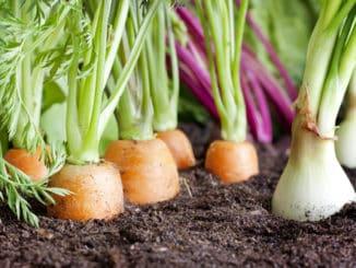 Koronavirus má pozitivní vliv na pěstování vlastních plodin
