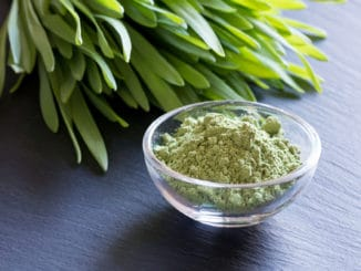 Fresh young barley grass with green barley grass powder