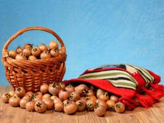 Mišpule: zapomenuté ovoce, které pomáhá trávení (nejen) u dětí