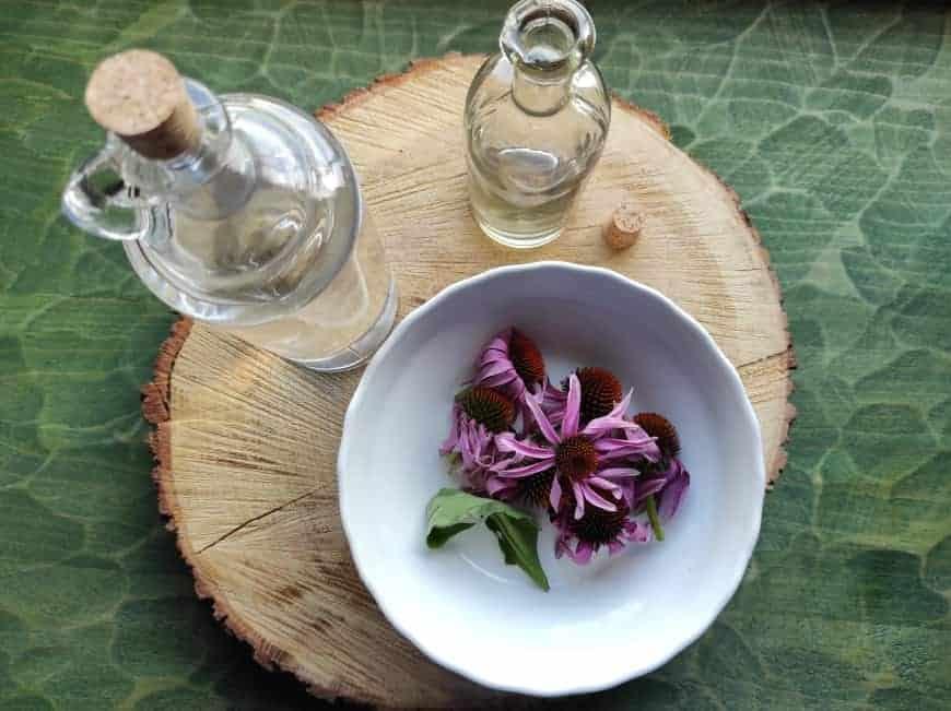 Tinktura z echinacey: využijte antibakteriální a antivirové účinky této rostliny