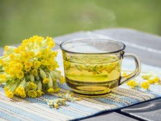 Prvosenka jarní (petrklíč) může účinně pomoci dýchacím cestám. Připravit si z ní lze salát, džem nebo čaj