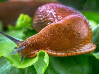 Zbavte se otravných slimáků na zahradě jednou provždy. Stačí dodržovat tyto postupy