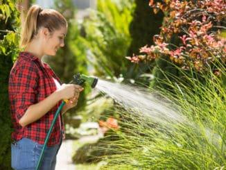 Pěstování zeleniny: Náš unikátní soupis vám poradí, co a jak často zalévat