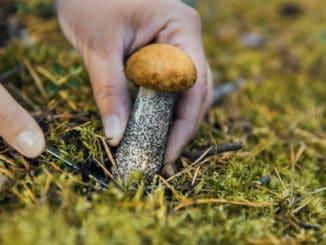 Kam v Praze vyrazit na houby: Poradíme vám zaručená místa i to, co si vzít s sebou