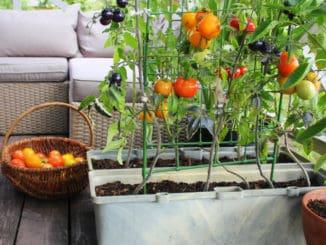 Jak si vypěstovat vlastní plodiny i bez zahrady. S těmito tipy to zvládnete levou zadní i vy