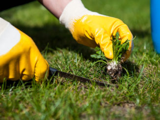 Jak se zbavit invazivních rostlin na vaší zahradě