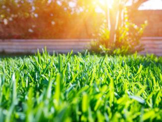 Nakypřit, dosít, posekat: Víme, jak na krásný trávník, který vám budou závidět i na golfovém hřišti