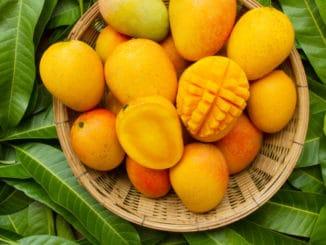 Jak si vypěstovat mango v pohodlí domova. Můžete se těšit z jeho plodů i vy