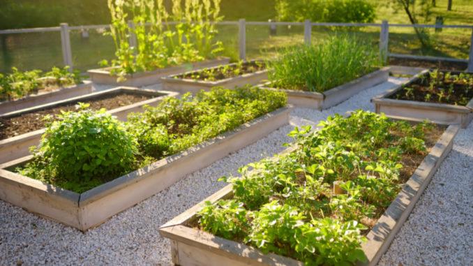 Vyvýšený záhon i přenosný kontejner: Květiny se dají pěstovat jednoduše všude
